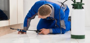 Pest Control and Cleaning Maintenance Services